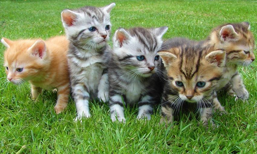 Una banda de gatitos